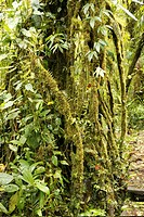 Costa Rica _ Monteverde _ Reserva Biologica Bosque Nuboso