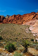 Red Rock Canyon, Spring Mountains, 15 miles west of Las Vegas in the Mojave Desert, Nevada, USA