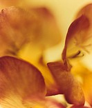 Kopia FOTO: Thomas Alvreten COPYRIGHT BILDHUSET Flower, Close_Up