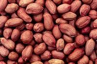 Jordnötter, Peanuts, Full Frame