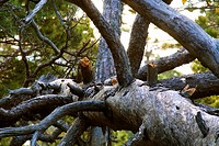 Urskogsbröte I Tyresta Nationalpark, Dried Tree In Forest, Close Up
