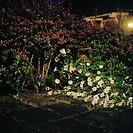 Nattbild På Blommor Och Buskar I Trädgård, Flowers Amid Bushes In Garden