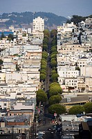 Tree lined street, San Francisco, California, United States of America, North America