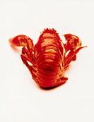 Kokt Kräfta, Crab, Close_Up