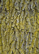 Bark med alger, Tree trunk with algae, close_up