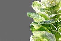 Cabbage leaves close_up