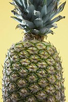 Close_up of single pineapple