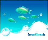 Animal, sea, GreenChromis, fishes, ocean, background (thumbnail)