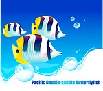 underwater, Butterflyfish, undersea, ocean, sea, Pacific Double_saddle Butterflyfish