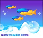 animal, sea, YellowValleyBlueDamsel, fishes, ocean, background
