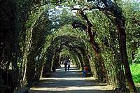 Cerchiata Grande, Boboli Gardens, Florence, Tuscany, Italy, Europe