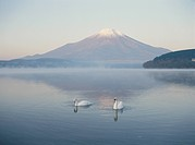 A Swan And Mt. Fuji In Yamanashi Prefecture
