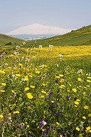 Spring meadow with snow covered Mount Etna in distance, Sicily, Italy, Europe