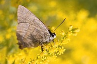 Butterfly enjoying yellow flowers