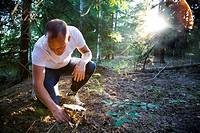 Man collecting mushrooms in forest En man plockar en stor svamp i skogen när solen lyser kraftfullt genom träden.