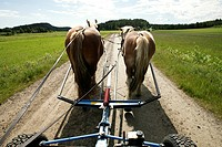 Två Hästar Med Vagn Efter Grusväg , Horses Pulling Wagon