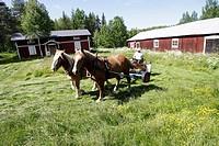 Man Slår Gräs Med Hästar På Traditionellt Vis Vid En Västerbottensgård, Horses Pulling Wagon