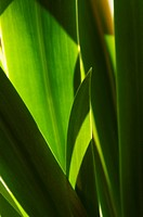 Gröna Blad, Close_Up Of Green Leaves