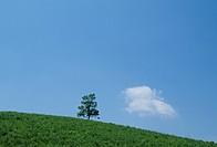 The Tree And Blue Sky On A Plateau