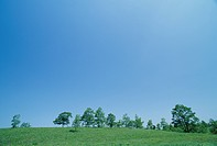 The Tree And Blue Sky On A Plateau