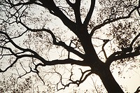 Tree In Silhouette