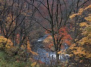 The Autumn Trees And A River