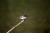 Bird Perching On Branch (thumbnail)