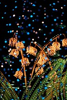Flowers And Leaves With Lights