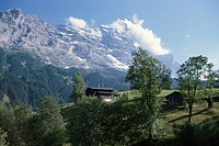 Scenery Of The Alps