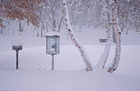 Snowy Phone Booth Near Birches