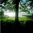 Träd vid sjö, trädgårdsmöbler i bakgrunden. Tree By Lake, Garden Furniture In Background