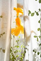 Oranga Påskfjärdrar På Björkkvistar Mellan Ljusa Gardiner, Bruce Tree By Window
