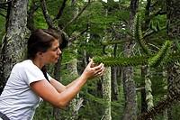 Araucaria araucana, Huerquehue Nationalpark, Chile