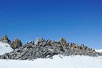 Antarctica, Half_Moon_Island, Chinstrap Penguin, Pygoscelis antarctica, breeding colony,