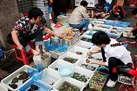 China, Guangdong Province, Guangzhou, Qingping market