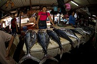Unidentified tuna for sale in one of Bali's fish markets