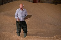 Farmer holding laptop and wheat grains on grain heap