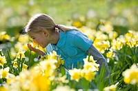 Young girl smelling daffodils