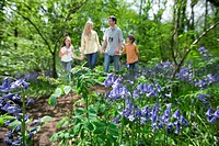 Bluebell flowers with family in background
