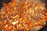 Chanterels Cantharellus cantharellus being fried in a pan with bacon and onions