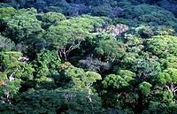 Tijuca Forest, Atlantic forest, Rio de Janeiro, Brazil