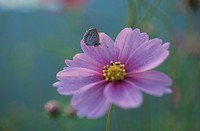 A Butterfly Rest On A Flower