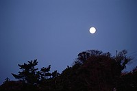 A Full Moon And A Forest (thumbnail)