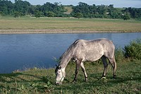 A Horse On The River Bank In Hokkaido