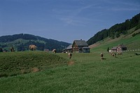 Cows And Green Forest In Switzerland (thumbnail)