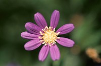 Flower (thumbnail)