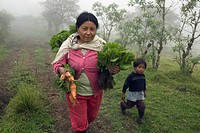 Woman with carrots and cabbage, freshly harvested, Casarpamba, province Imbabura, Ecuador