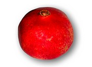 Pomegranate Punica granatum