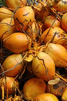 Ripe coconuts, Cocos nucifera, Mauritius