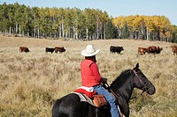 Rancher with Herd of Cattle